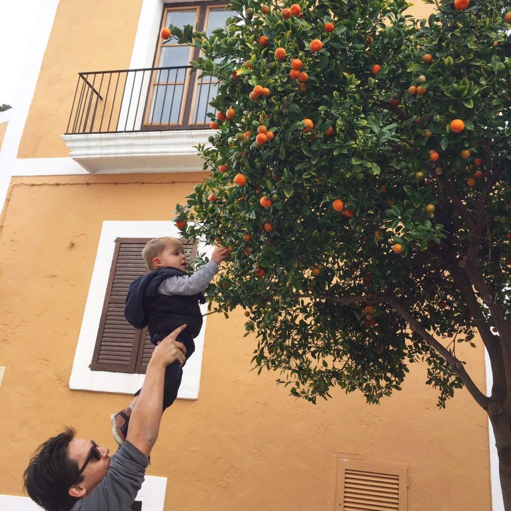 Mandarijnen plukken Eivissa Ibiza stad februari Dagboek foodblog Foodinista