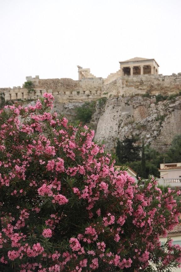 Plaka en bijna bij de Akropolis en omgeving Foodinista in Athene Griekenland