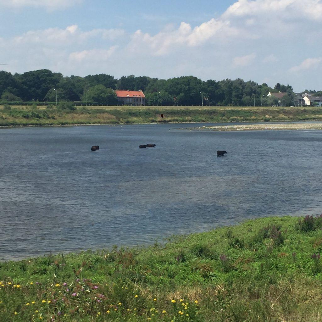 Uitzicht op de Maas