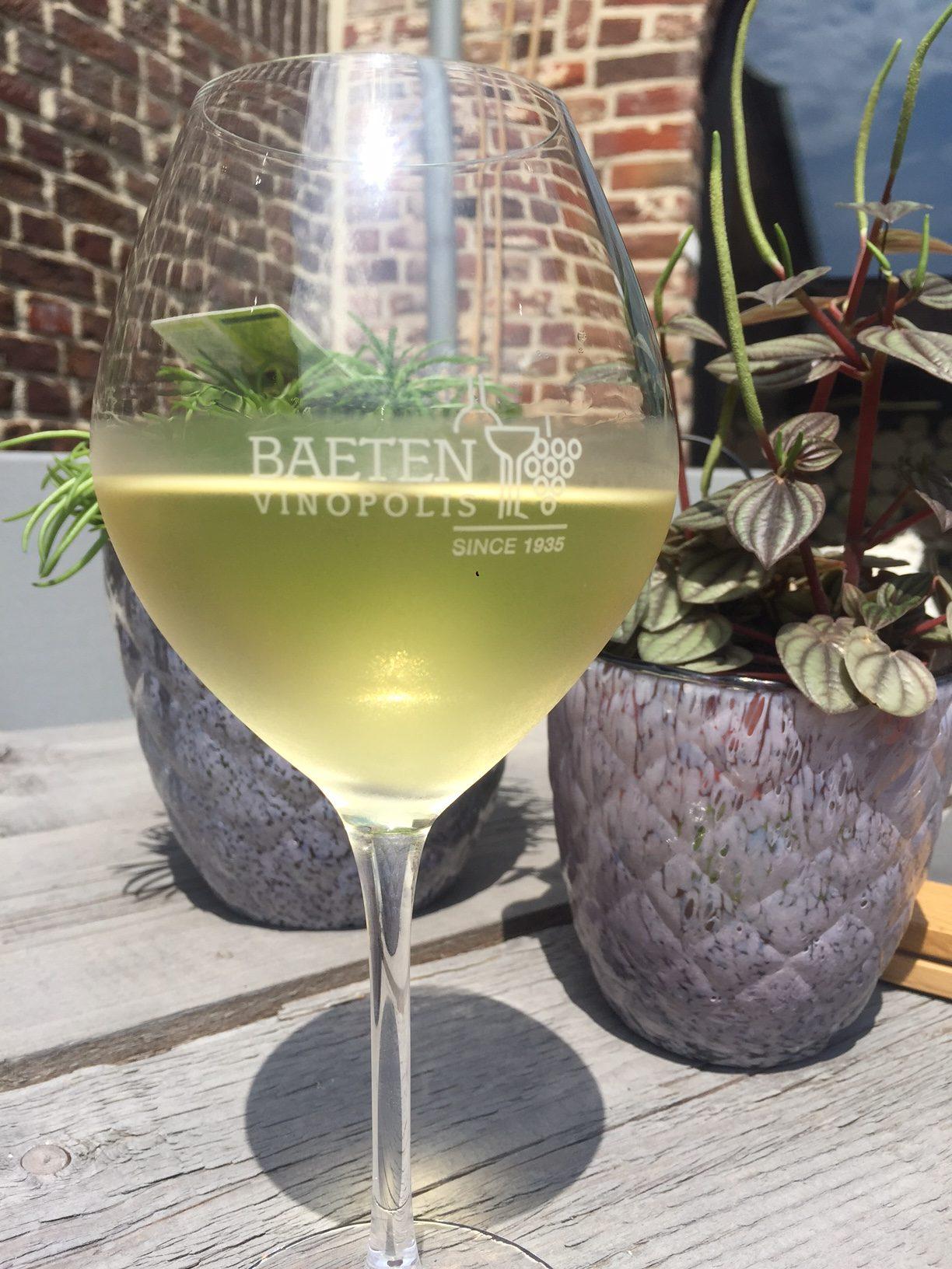 Witte wijn uit Aldeneik Foodie in de Maasvallei Limburg Foodblog Foodinista