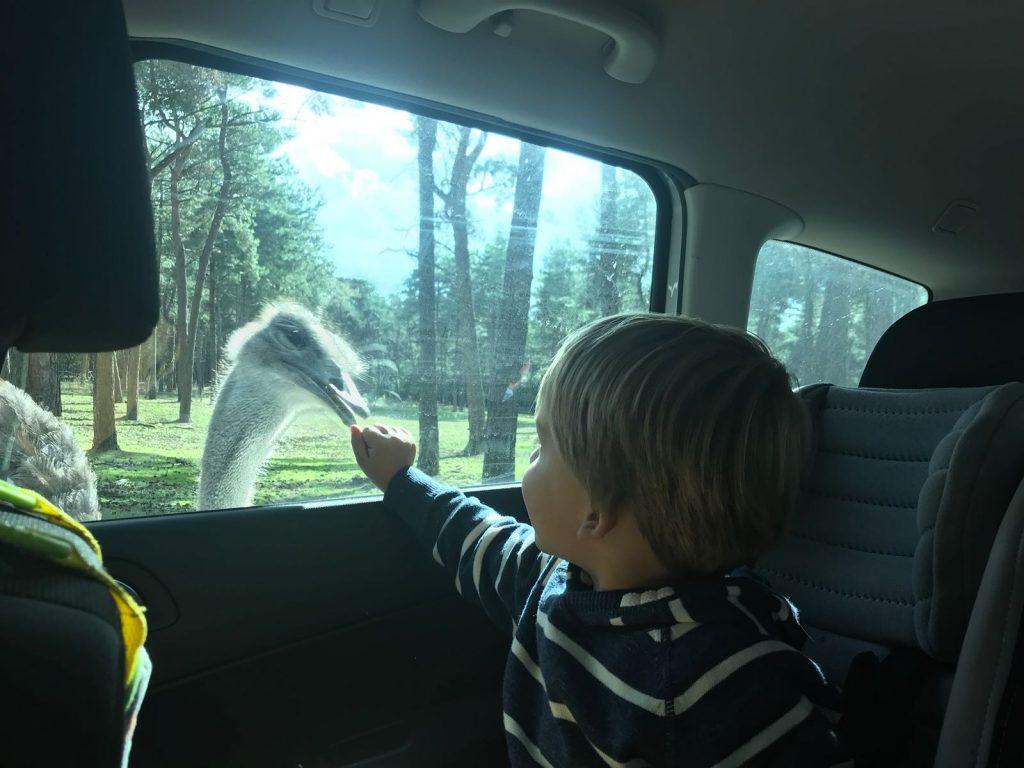 Autosafari Beekse Bergen