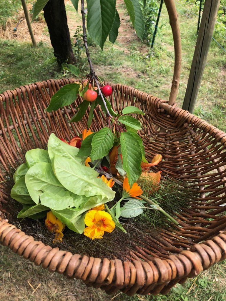 Kruiden plukken in de tuin voor de kookworkshop in de Ardèche bij l'oustalou in Frankrijk reis tips van Foodinista