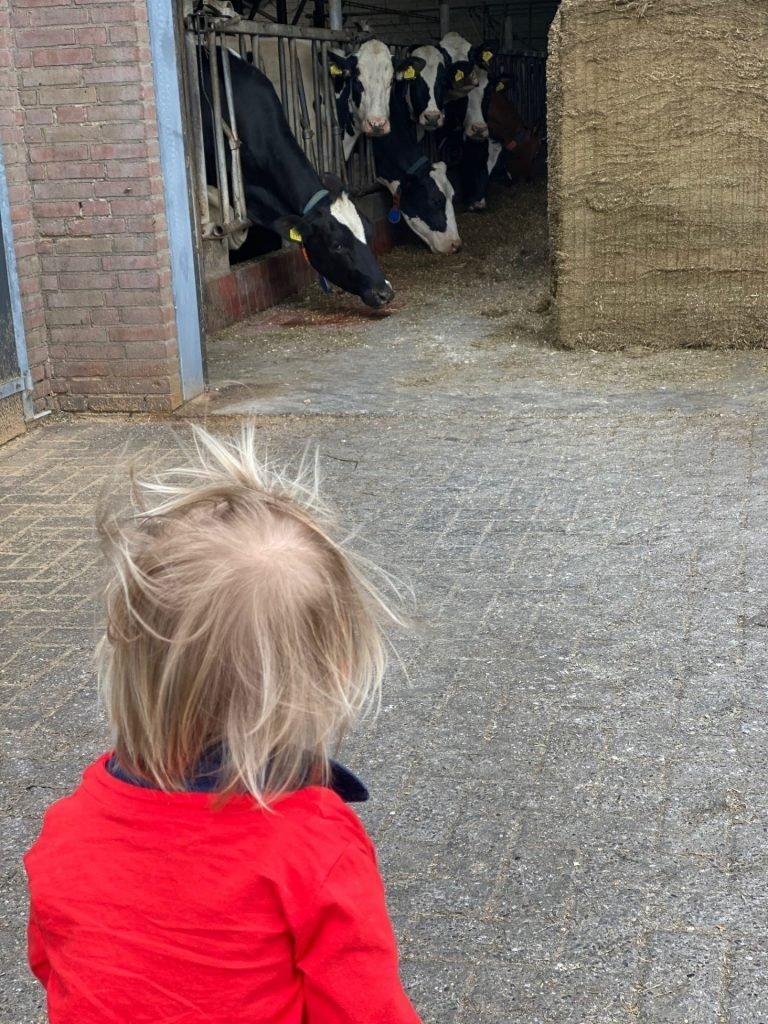 Bezoek aan de zuivelboederij in Waalwijk