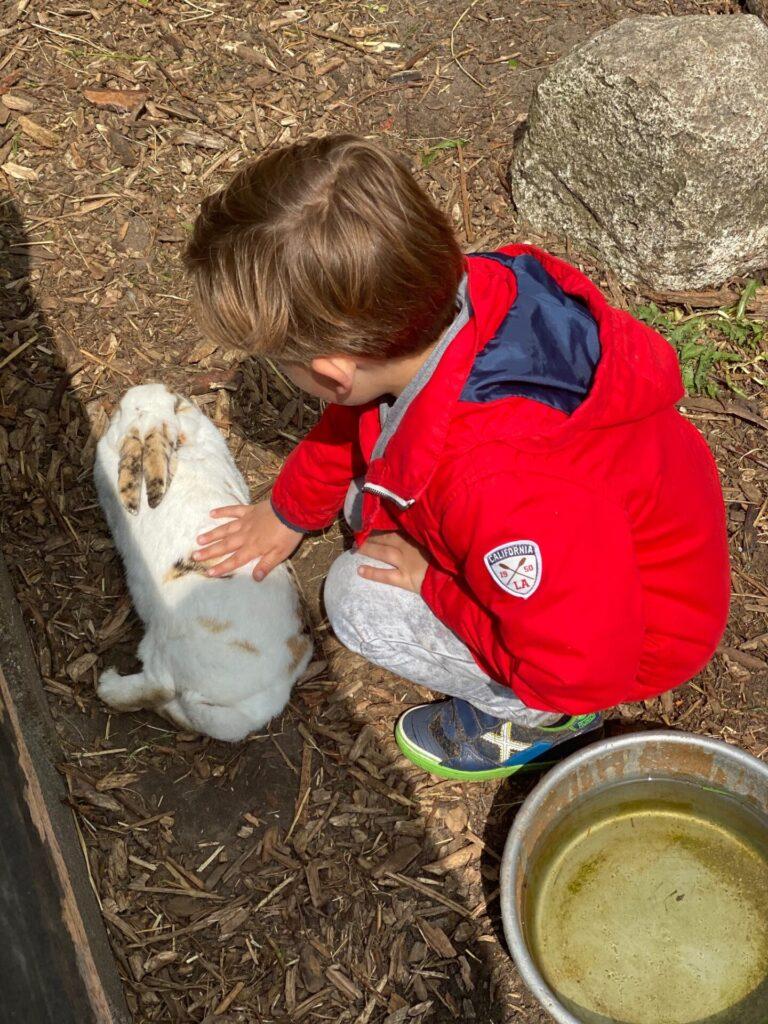 Konijntjes aaien en eten geven - Farmcamps boerderij Sonneclaer in Drenthe - Vakantie tips in Drenthe